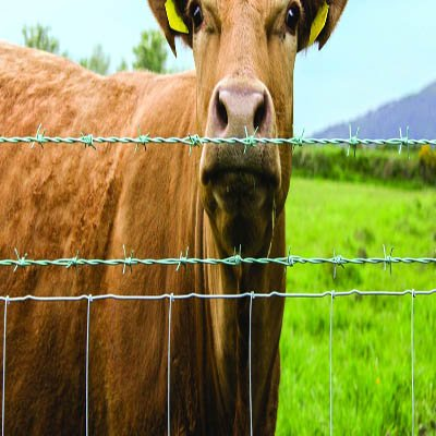 cattle fencing.jpg
